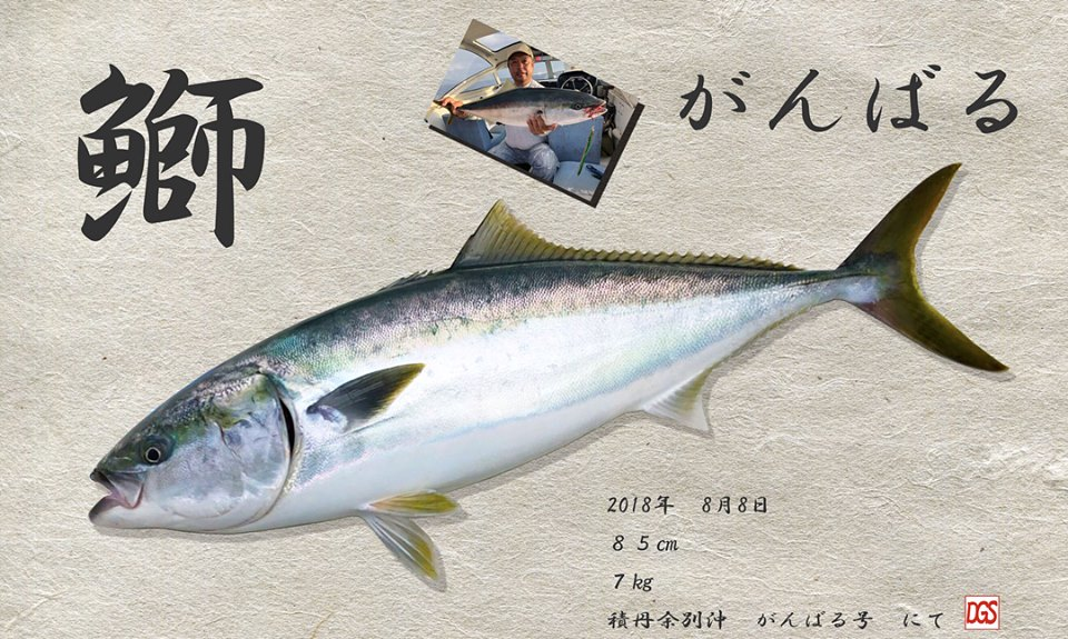 鰤のリアル加工の魚拓