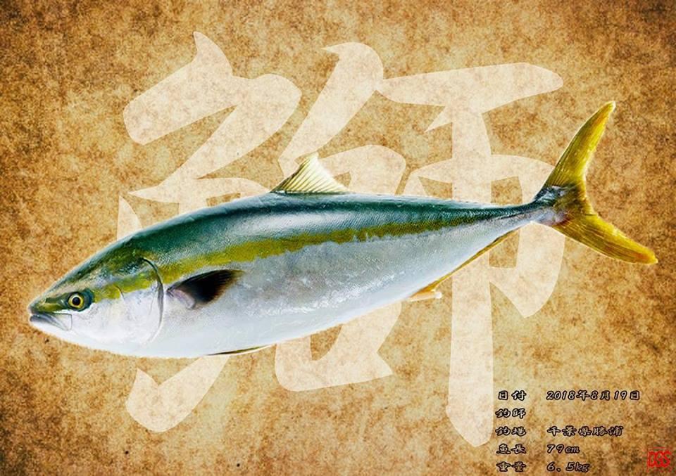 千葉県勝浦で釣られた鰤