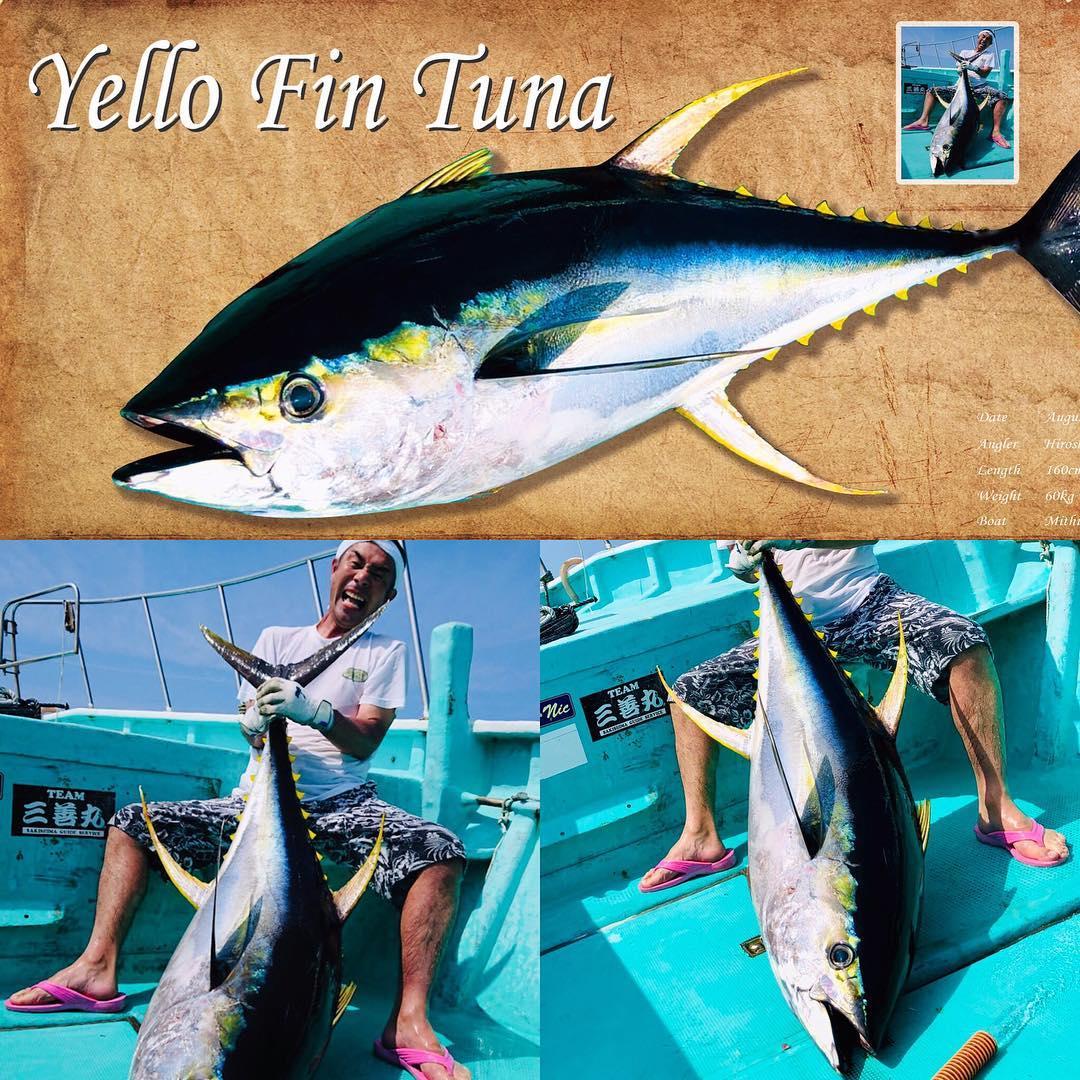愛知県沖で釣られた60㎏のキハダ